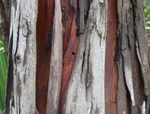 Another borer in a tree trunk.
