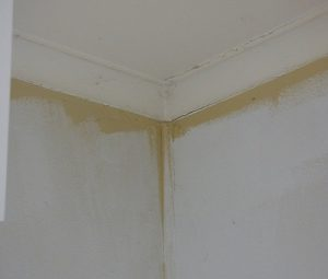 Water damage to a ceiling and wall.