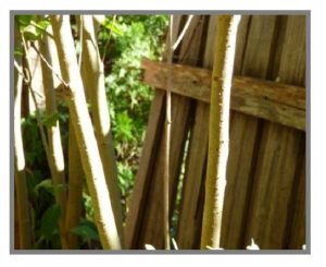Fungal decay caused this fence to collapse. Canberra Building Inspections.